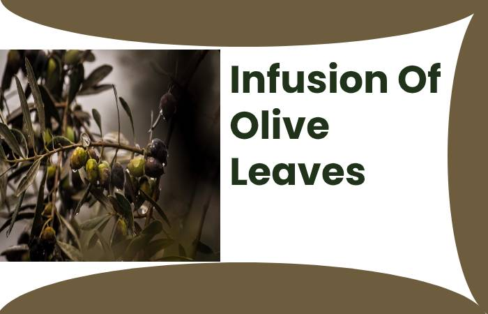 Infusion Of Olive Leaves