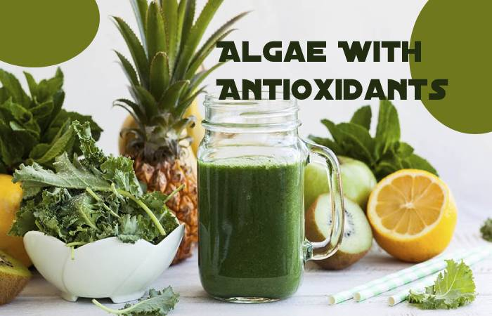 Algae With Antioxidants