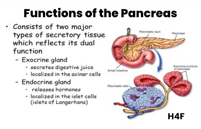 Functions of the Pancrease